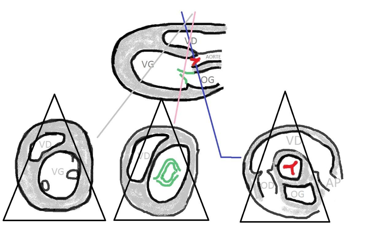 Vous souhaitez débuter en écho cardio  : voici les coupes de base pour commencer